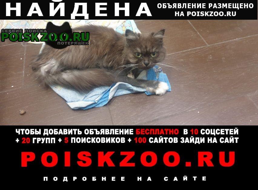 Найдена кошка животному на вид 5-7 лет Кемерово