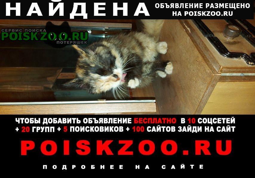 Найдена кошка трёхцветная Чехов