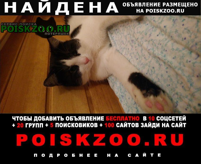 Найдена кошка ласковый.. Санкт-Петербург