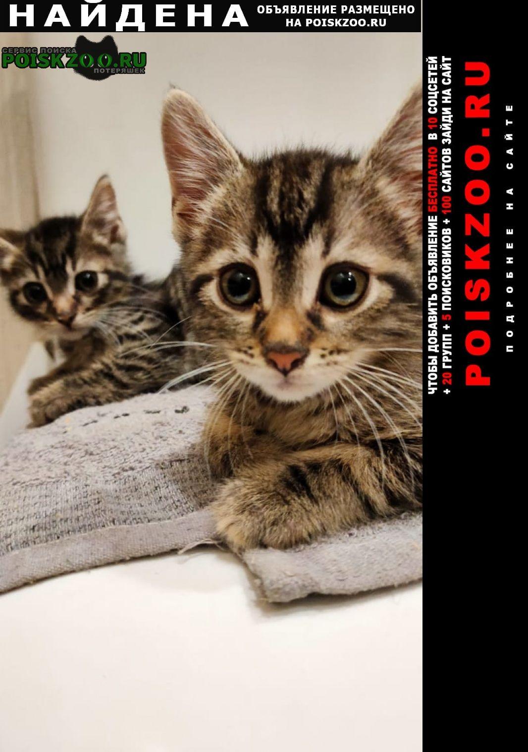 Найдена кошка котята ищут дом Краснодар