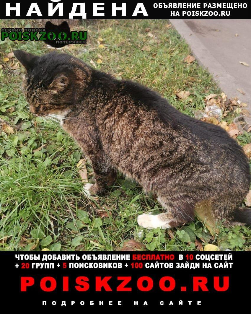 Найдена кошка кот. шелепиха. домашний лет 5-6 Москва