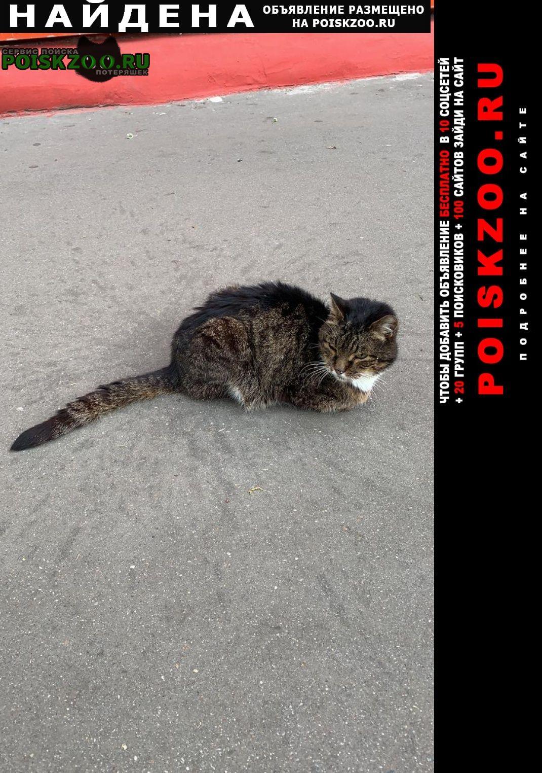 Найдена кошка кот, похож на пароду мейн-кун Москва