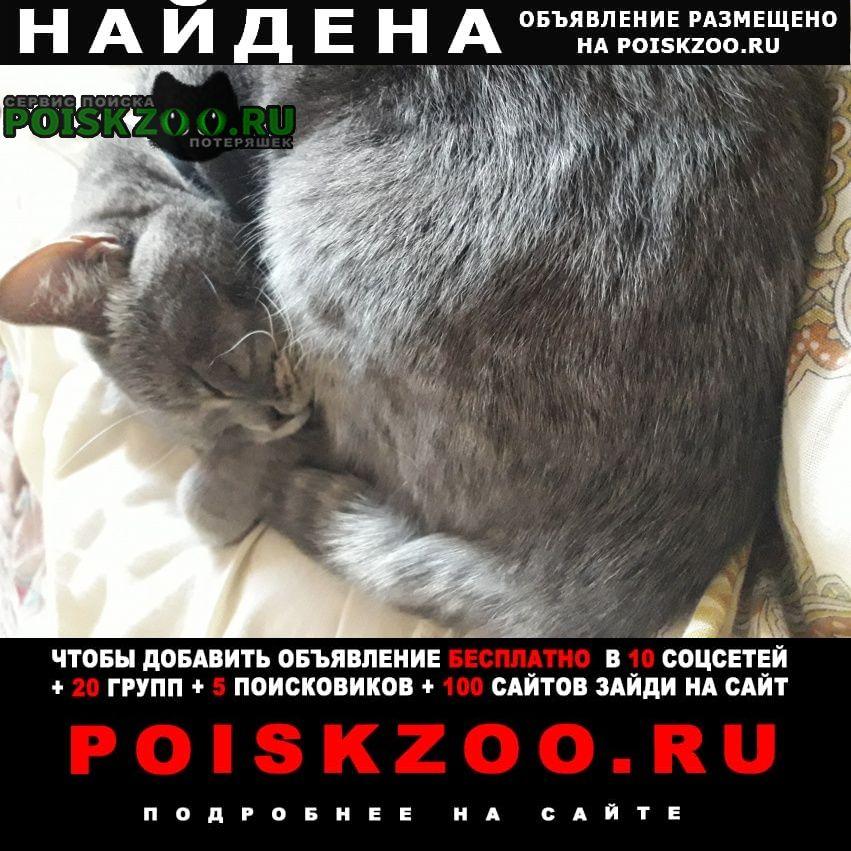 Найдена кошка Томск
