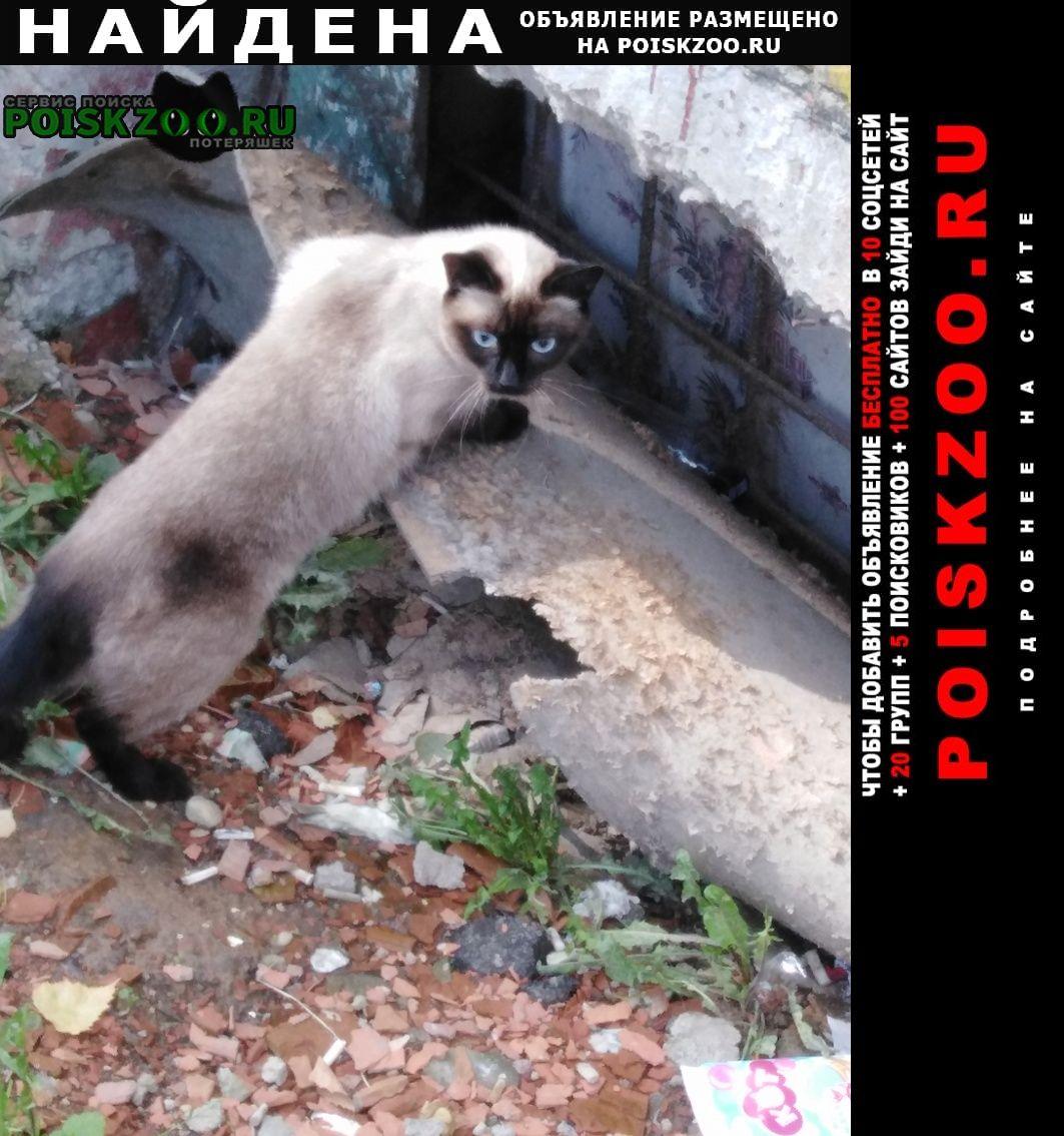 Найдена кошка или кот  Смоленск