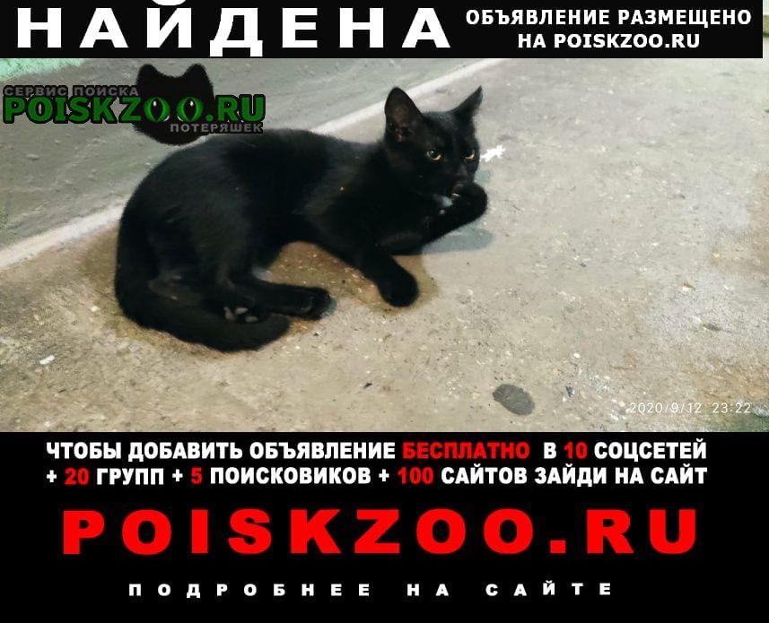 Найдена кошка котенок, около 4х месяцев, черный Москва