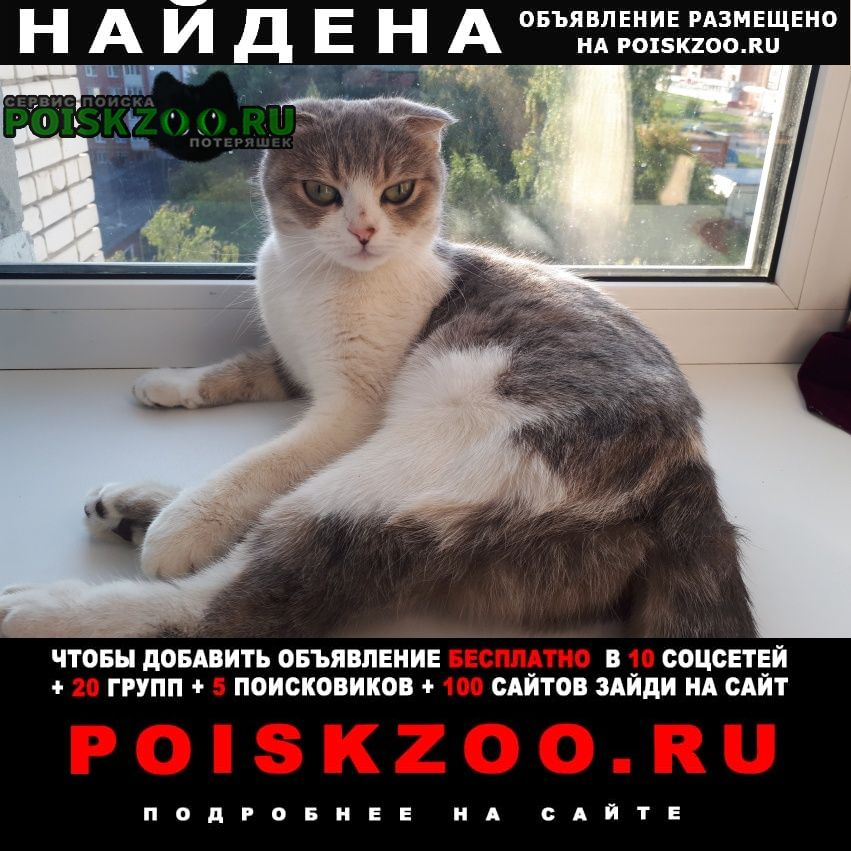Найдена кошка кошечка Чебоксары