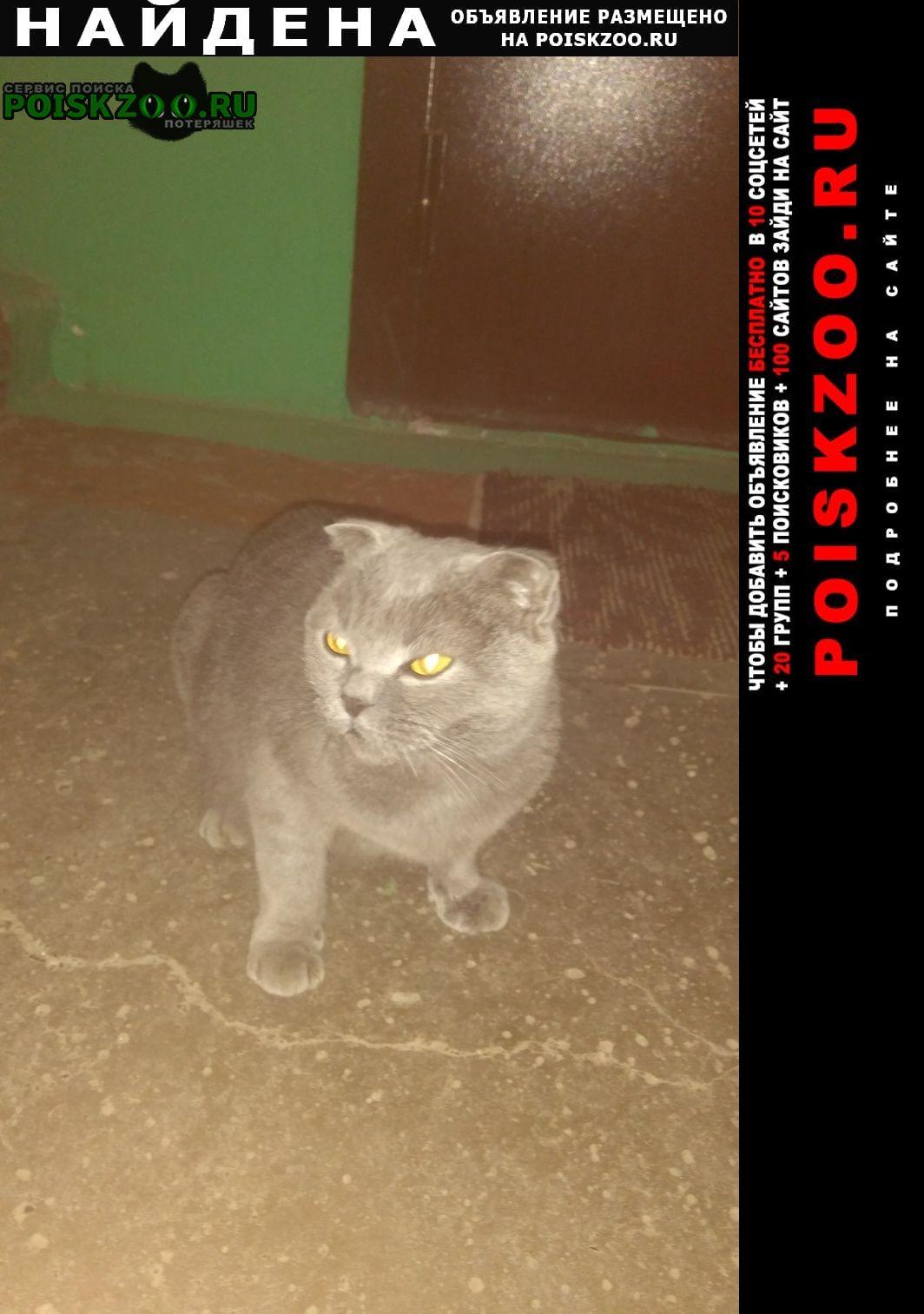Найдена кошка прибилась кошечка. Дзержинск