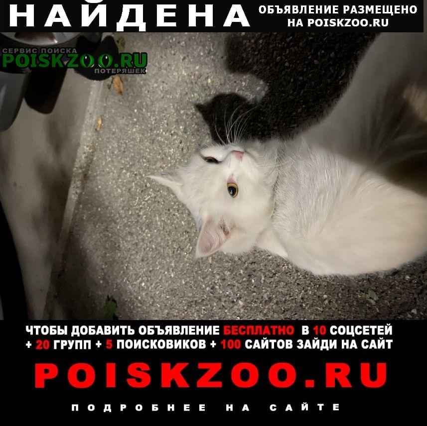 Найдена кошка Пятигорск