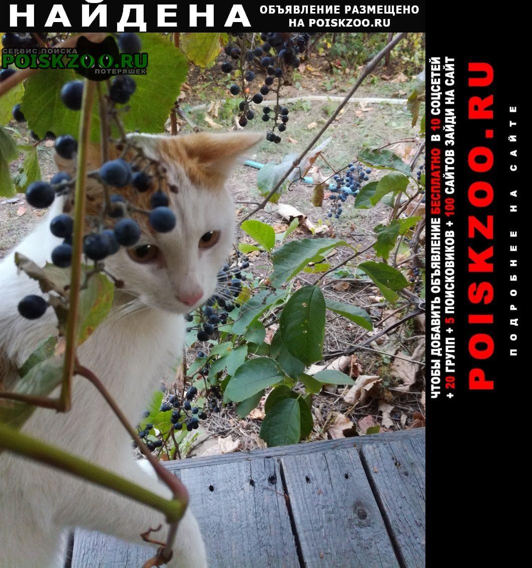 Найдена кошка котик Энгельс