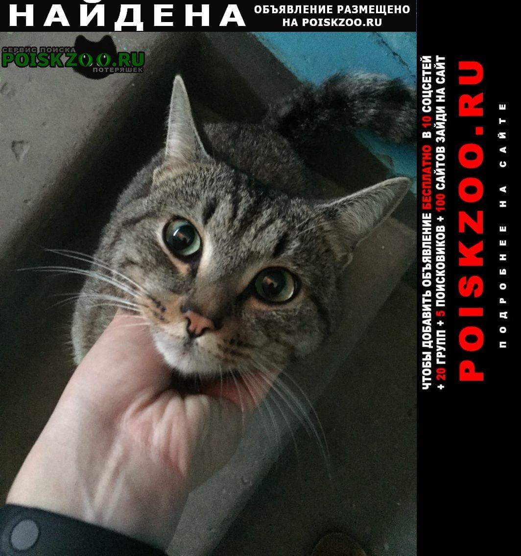 Найдена кошка Бердск