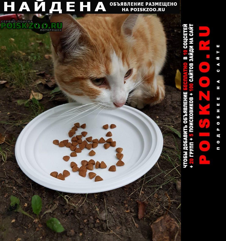 Найдена кошка на ул. багрицкого Москва