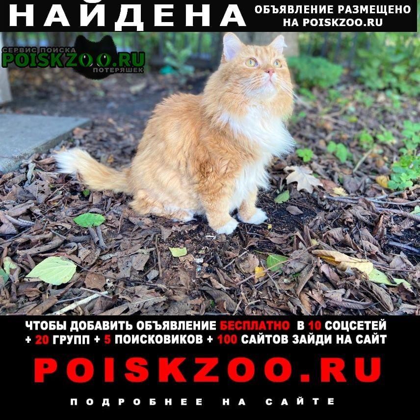 Найдена кошка рыжая ( кот) Санкт-Петербург