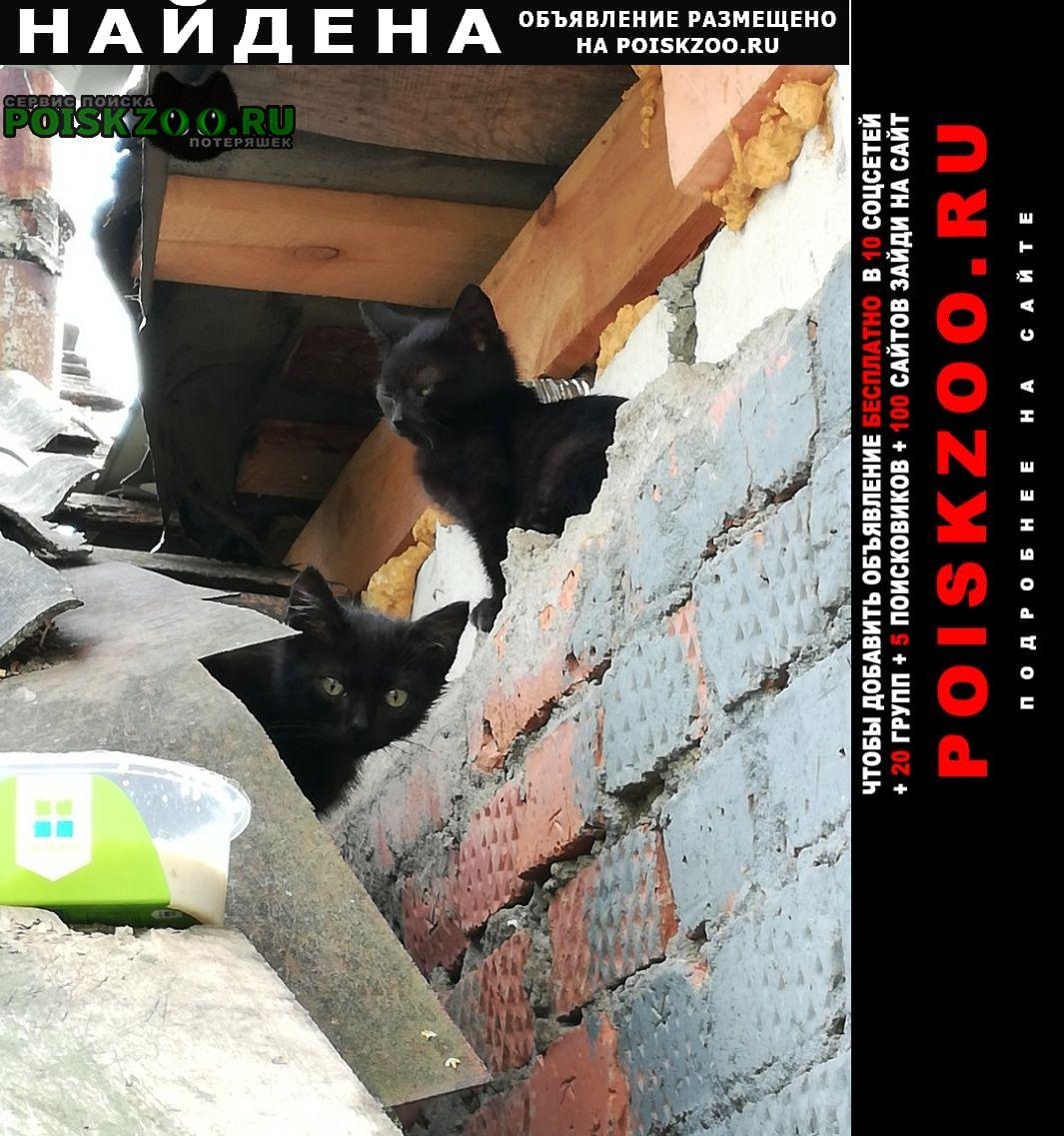Найдена кошка ищем дом Коломна