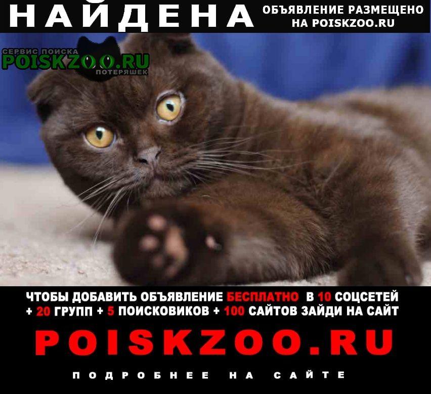 Найдена кошка вислоухая Санкт-Петербург
