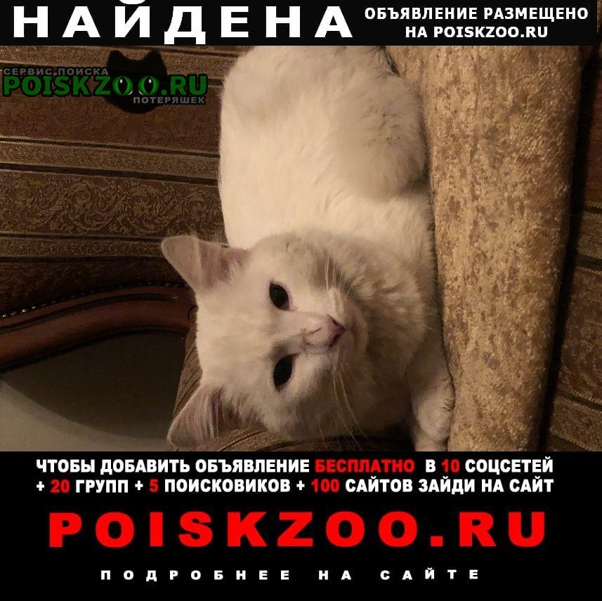 Найдена кошка фенотип ангорской. Москва