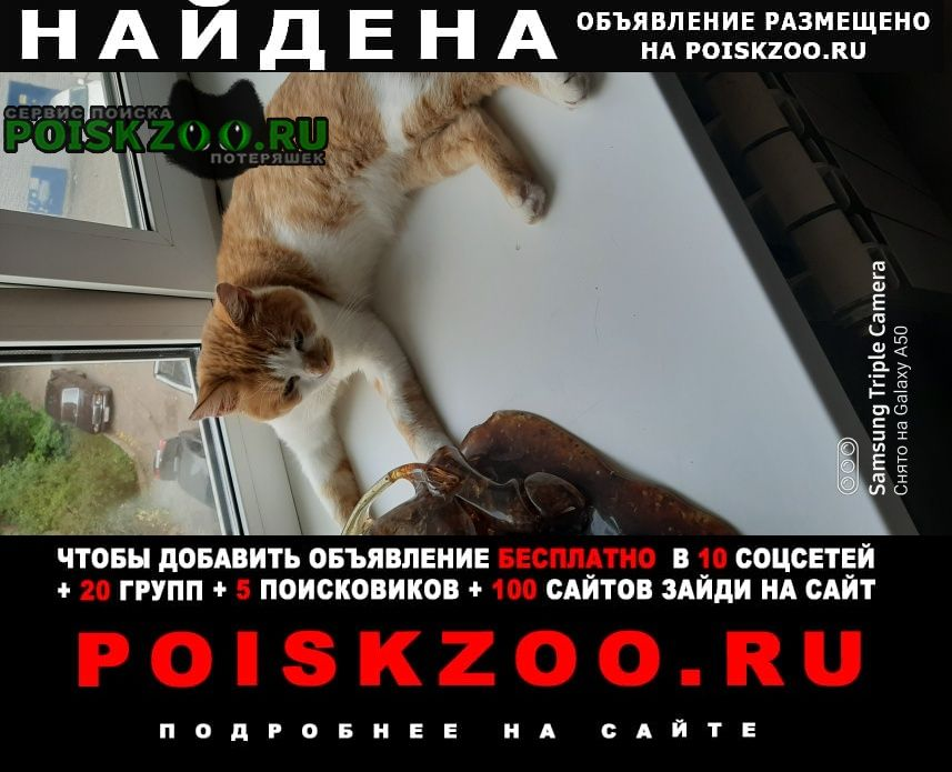 Калуга Найдена кошка