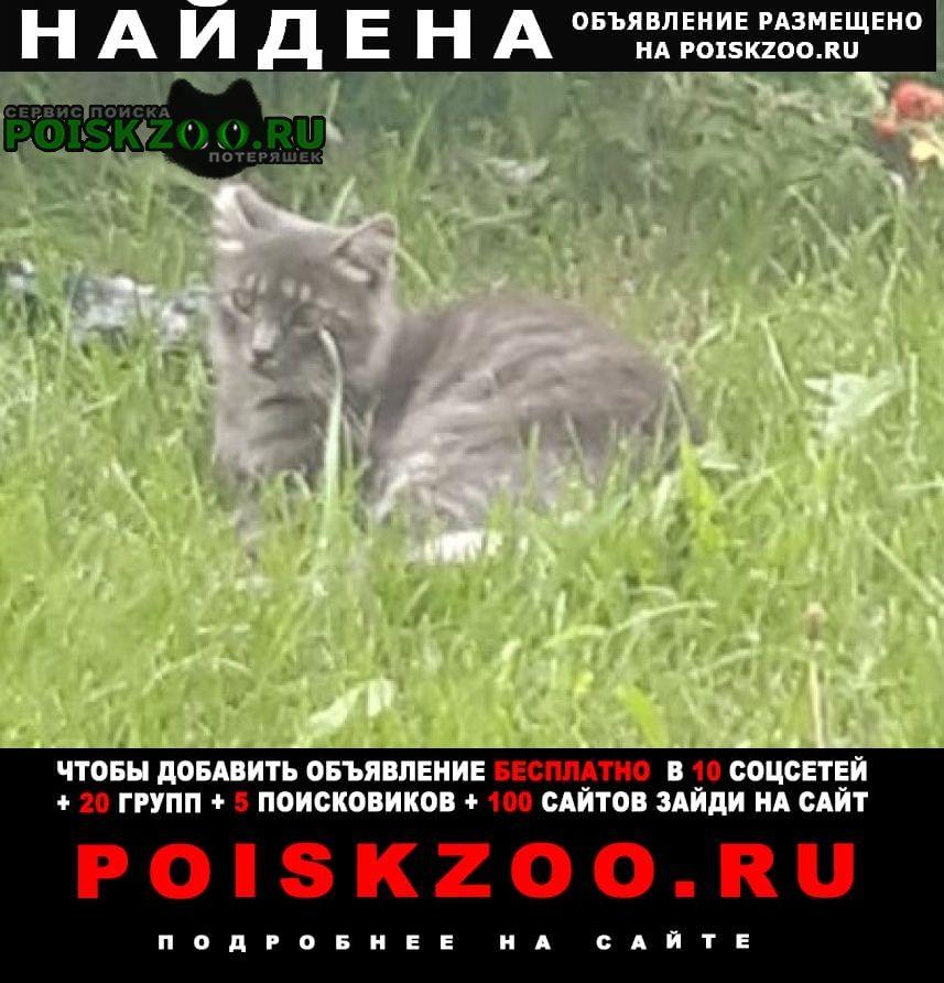 Санкт-Петербург Найдена кошка серая кошечка с коротким хвостом