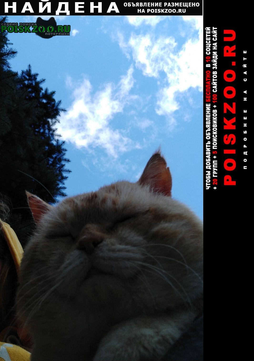Чехов Найдена кошка кот не кастрированный