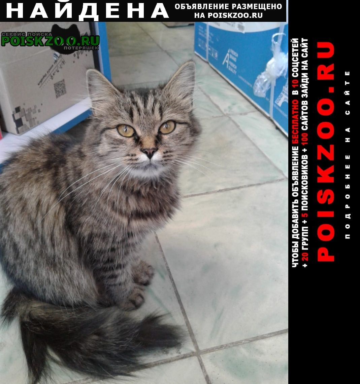 Найдена кошка Новомосковск