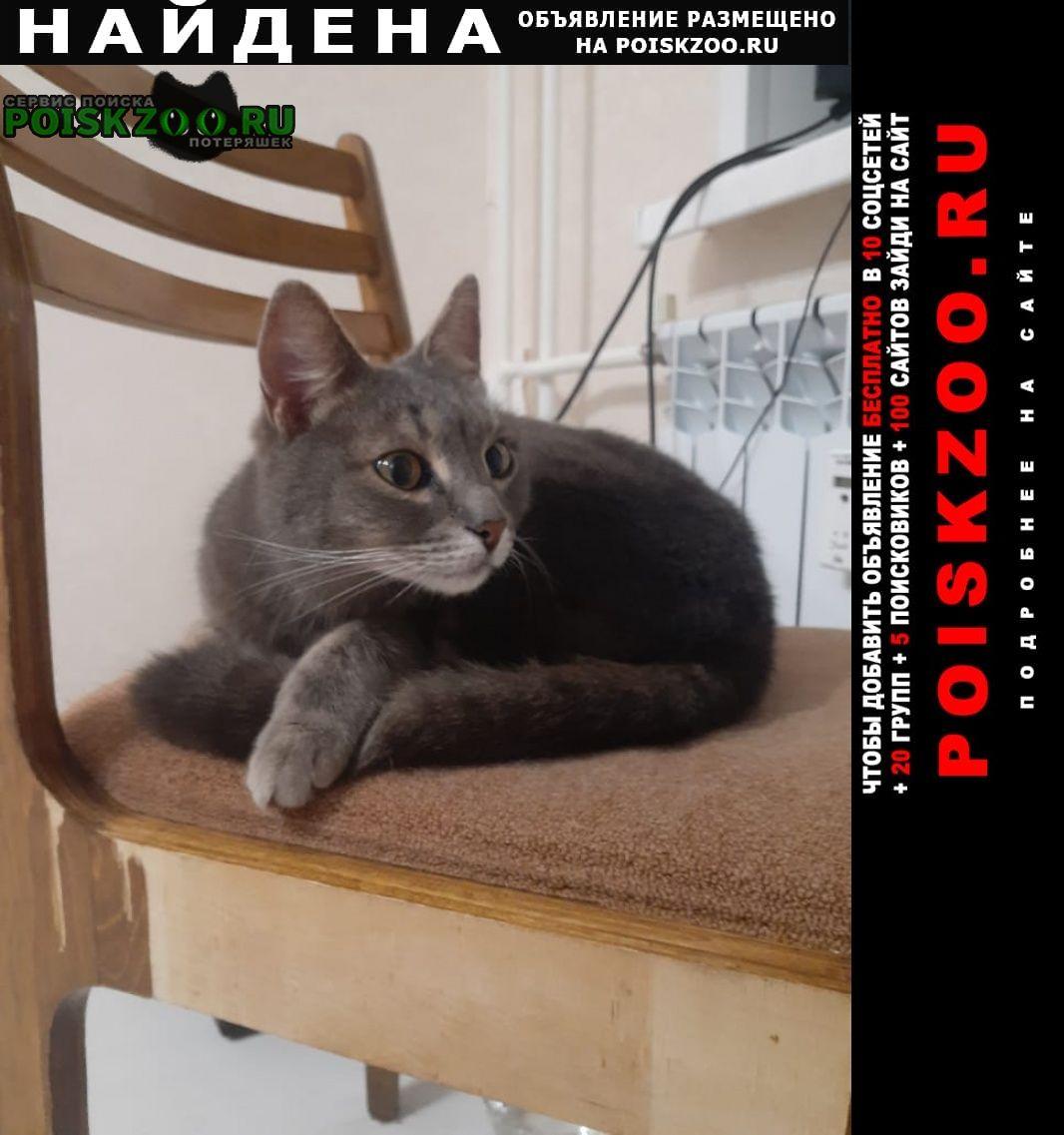 Найдена кошка серый кот, дзержинский рн Ярославль