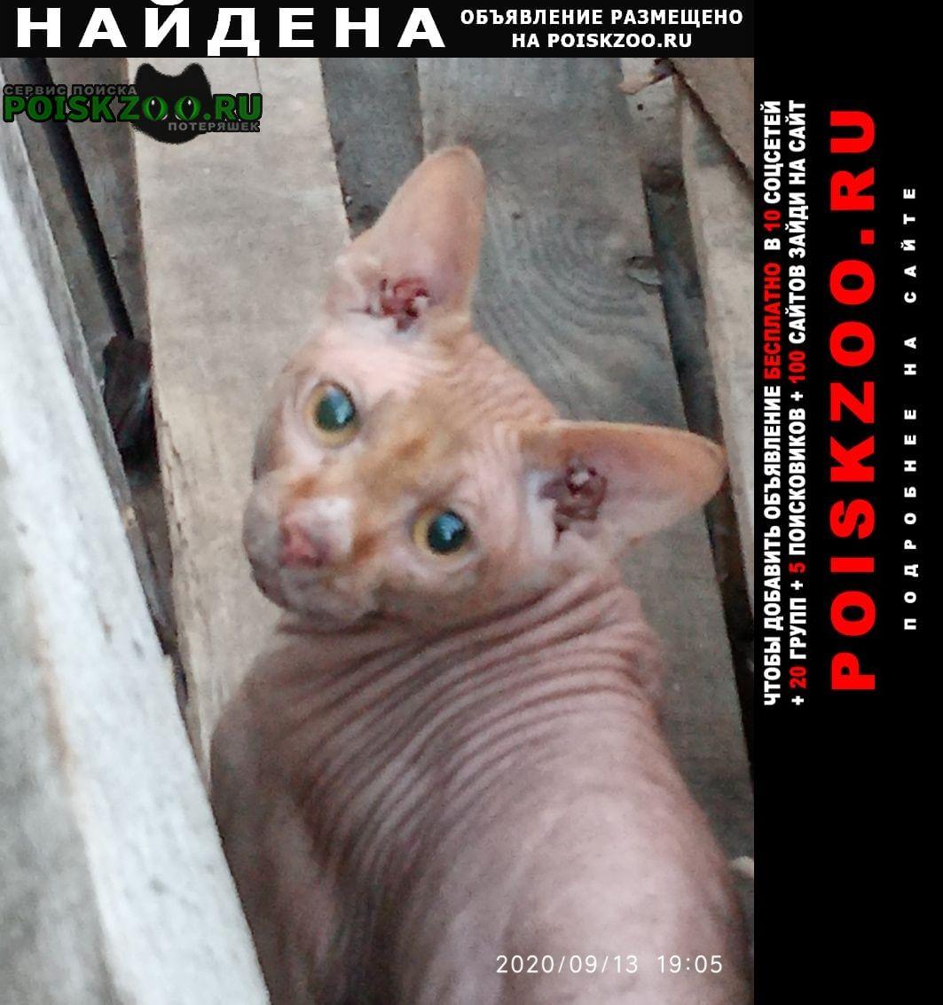 Найдена кошка приблудился кот Саратов