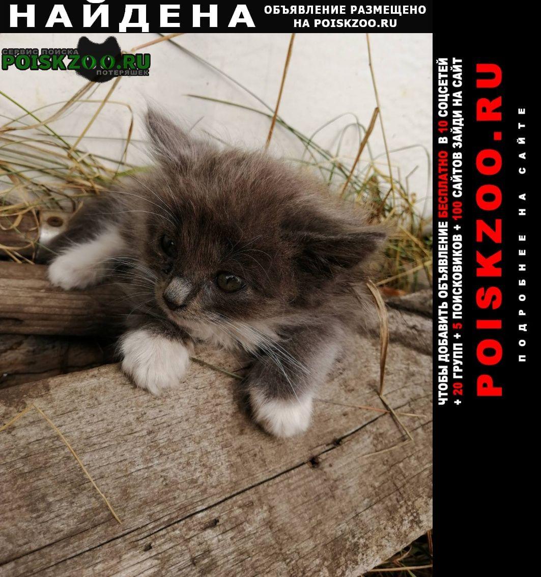 Найдена кошка ищем дом для котят Самара