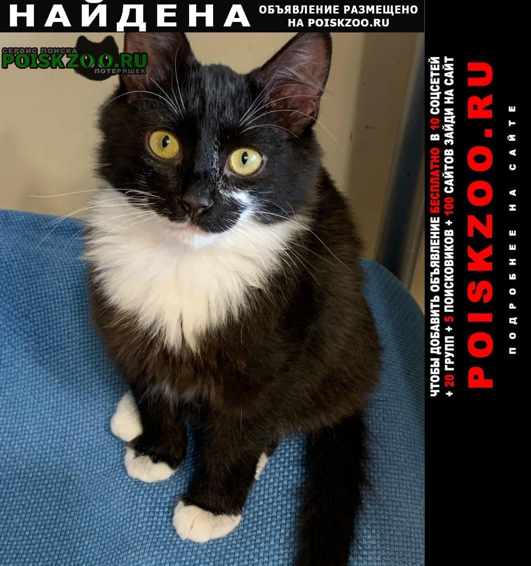 Найдена кошка черно-белый кот тропарёвский парк Москва