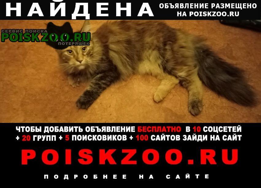 Санкт-Петербург Найдена кошка