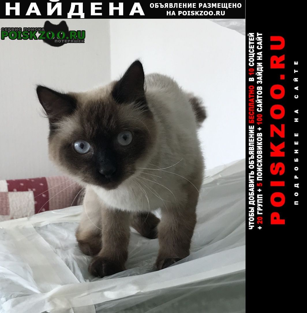 Хабаровск Найдена кошка молодой тайский кот