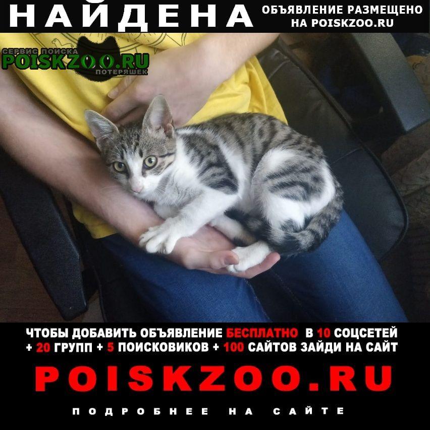 Москва Найдена кошка кот