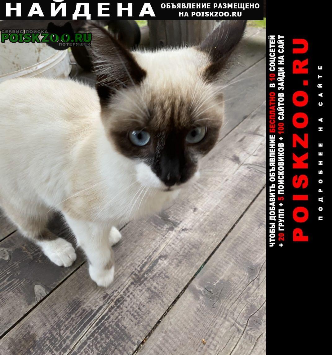 Истра Найдена кошка кот