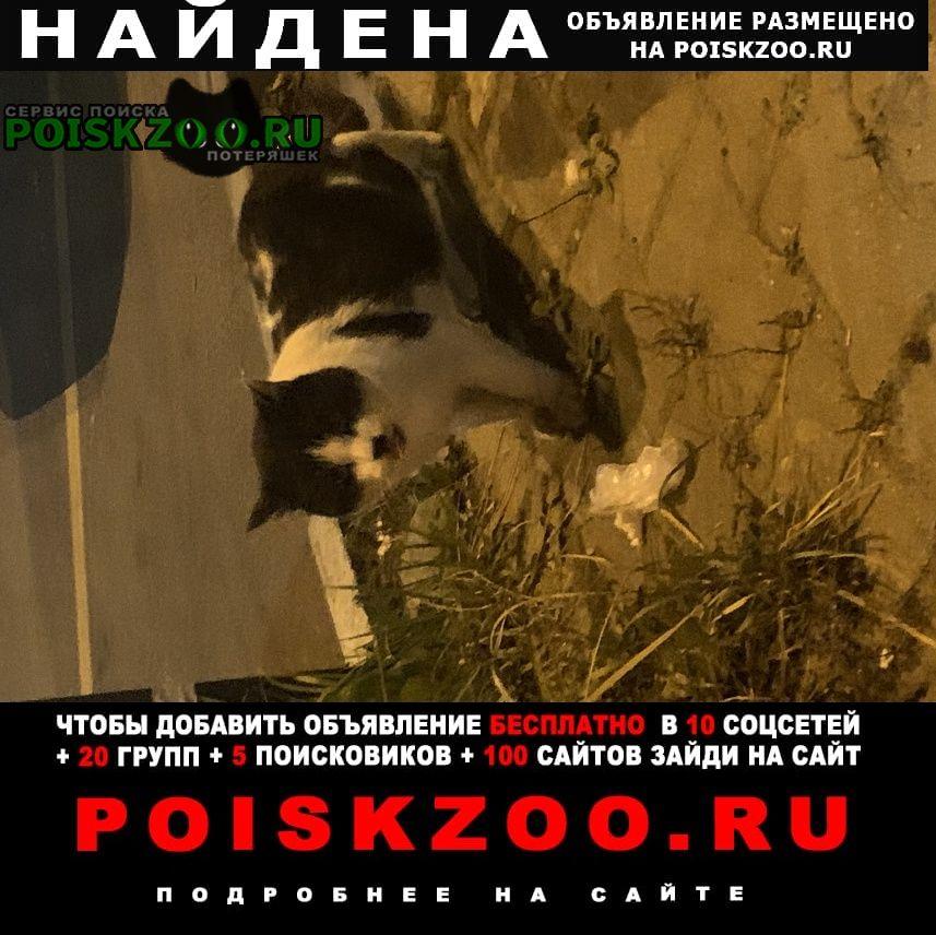 Истра Найдена кошка