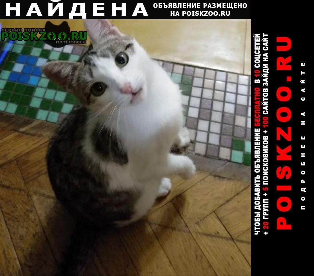 Найдена кошка район мосфильм потылиха Москва
