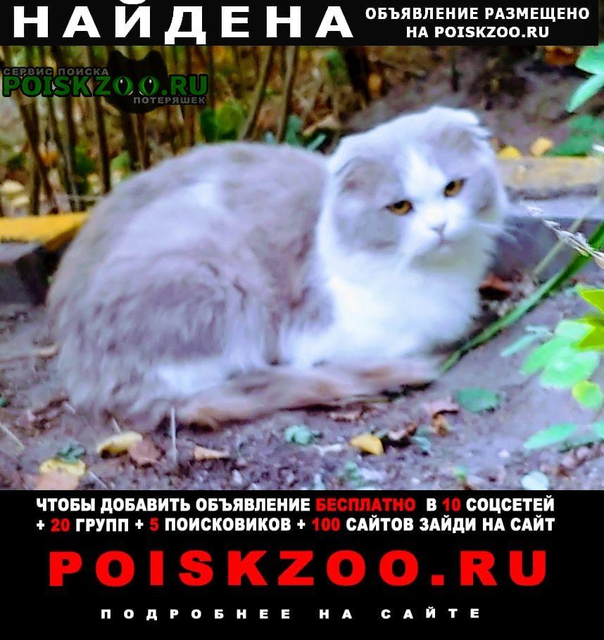 Найдена кошка вислоухий серо-белый кот Нижний Новгород