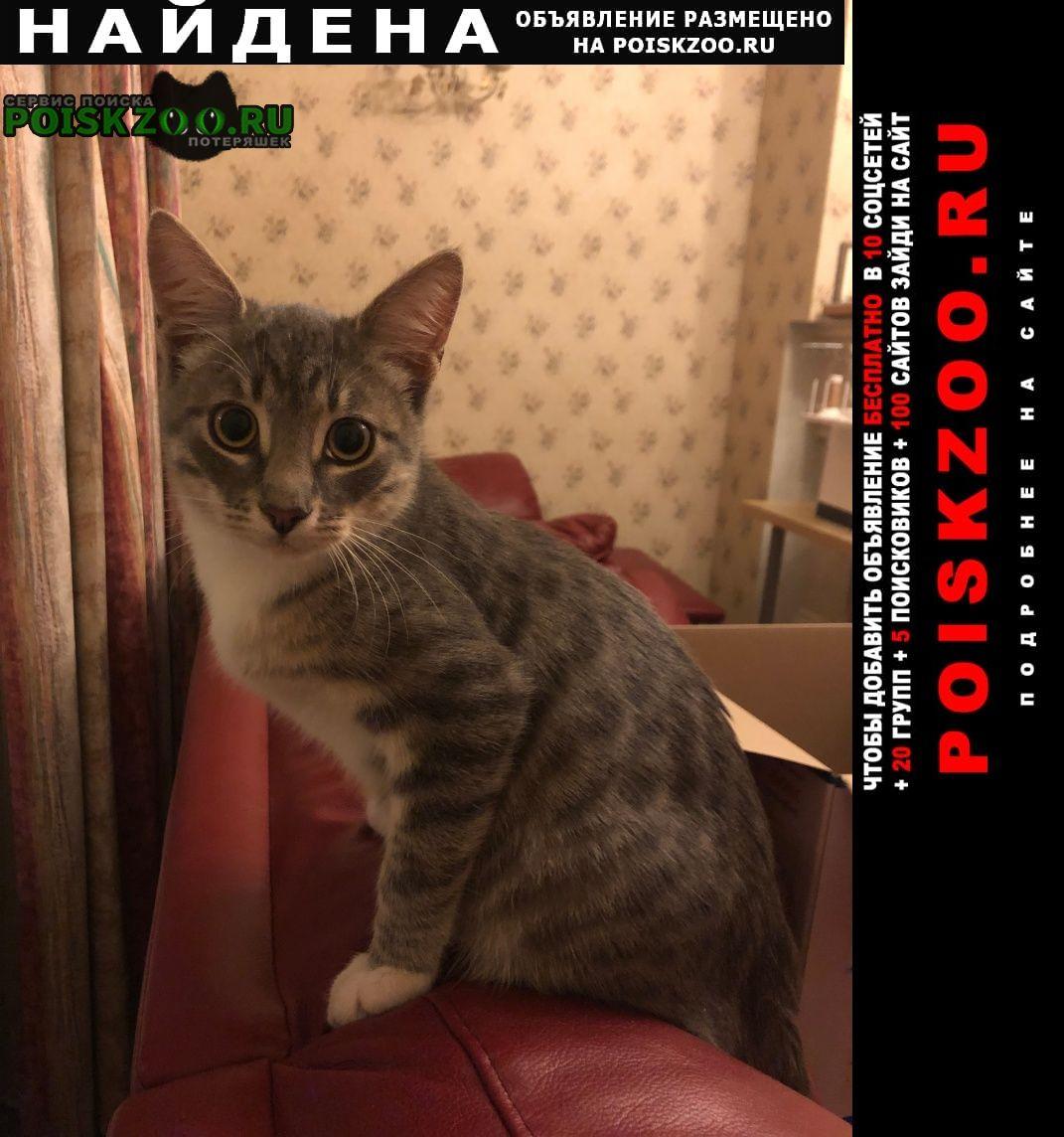 Найдена кошка (котёнок-мальчик в пучково) Троицк