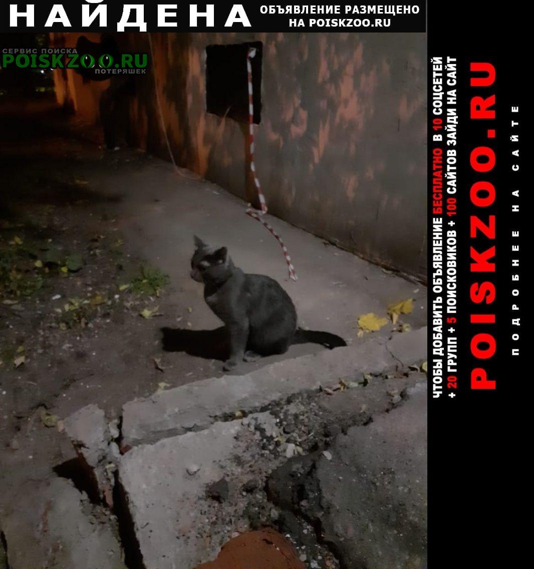Найдена кошка домашний котик Москва