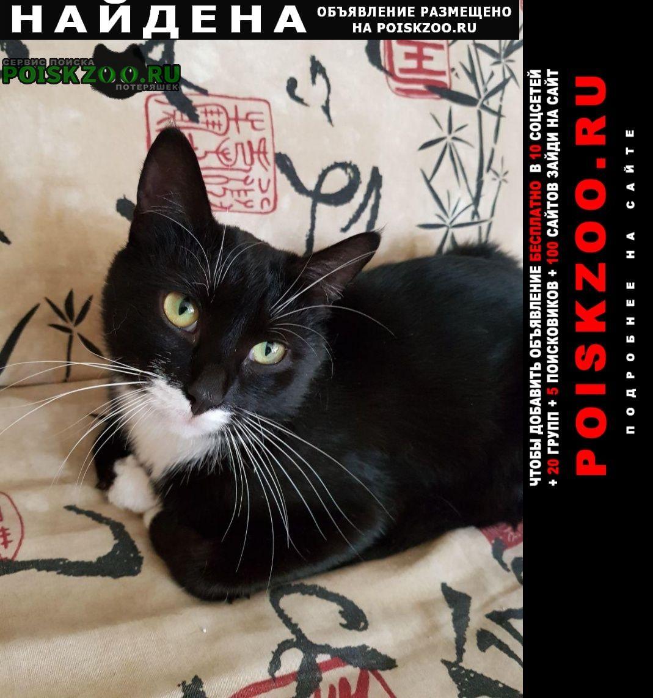 Найдена кошка г. Москва