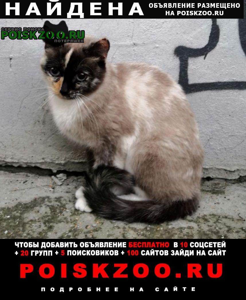 Екатеринбург Найдена кошка