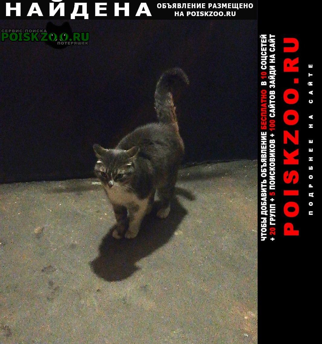 Найдена кошка или котик домашний Москва
