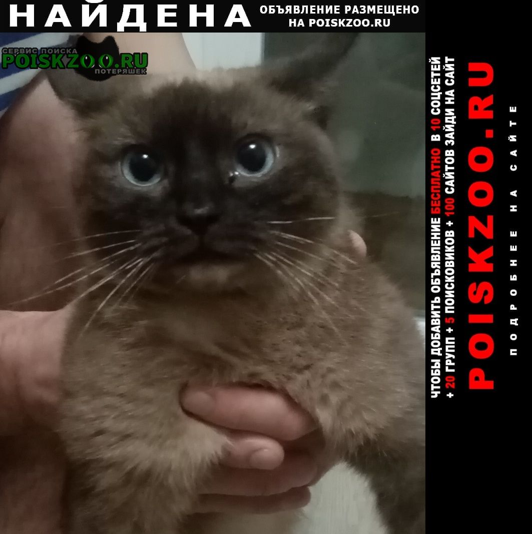 Красногорск Найдена кошка