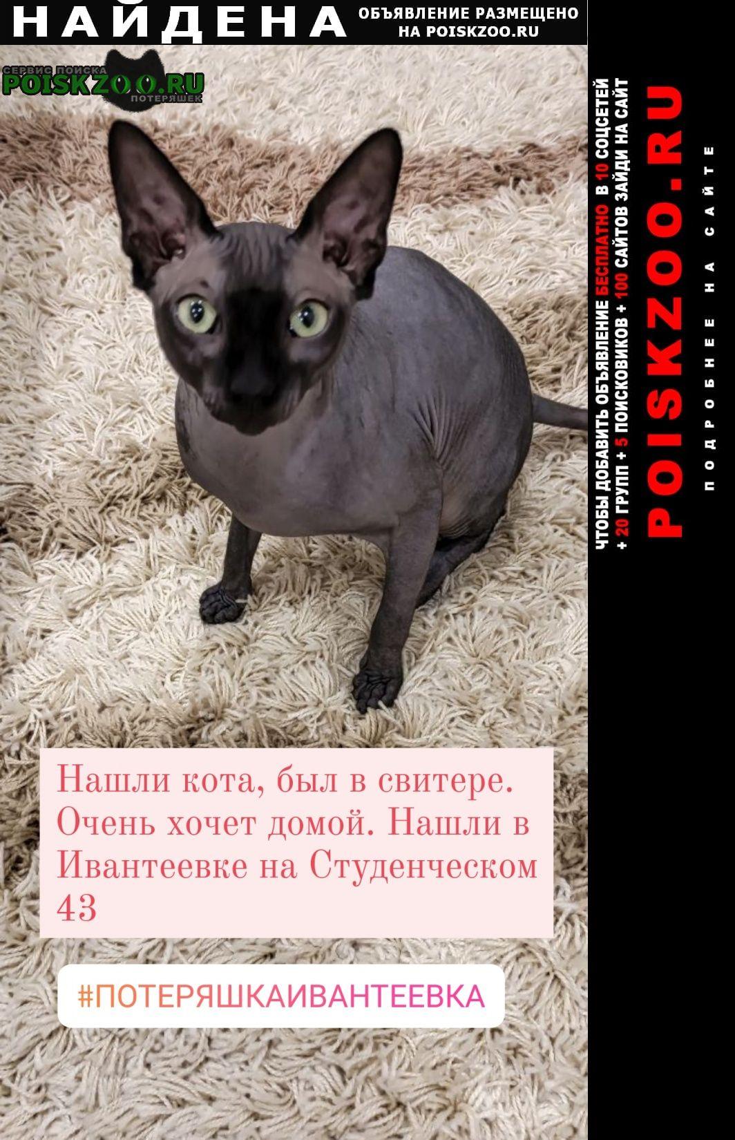Найдена кошка кот сфинкс Ивантеевка (Московская обл.)