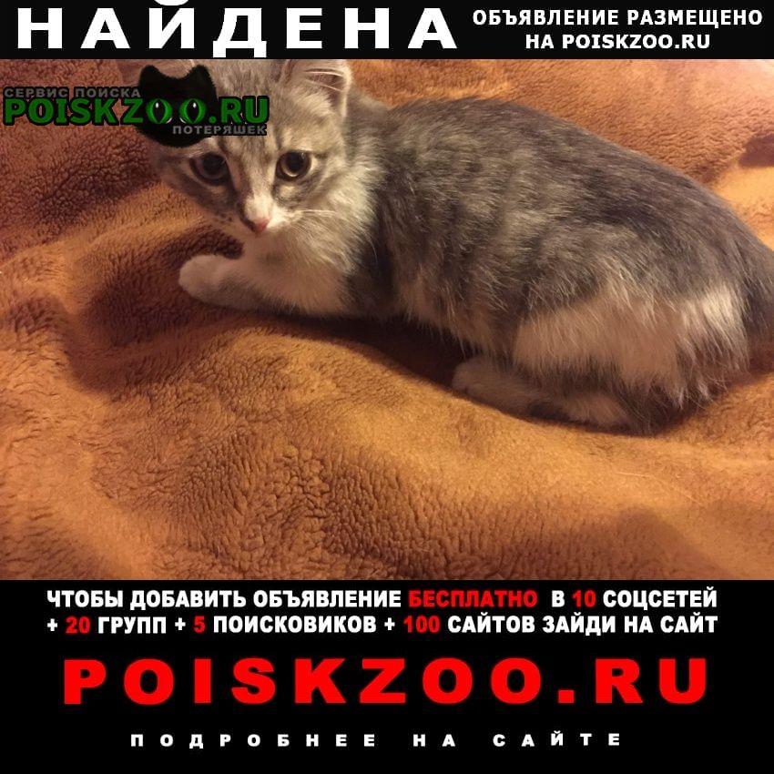 Пенза Найдена кошка