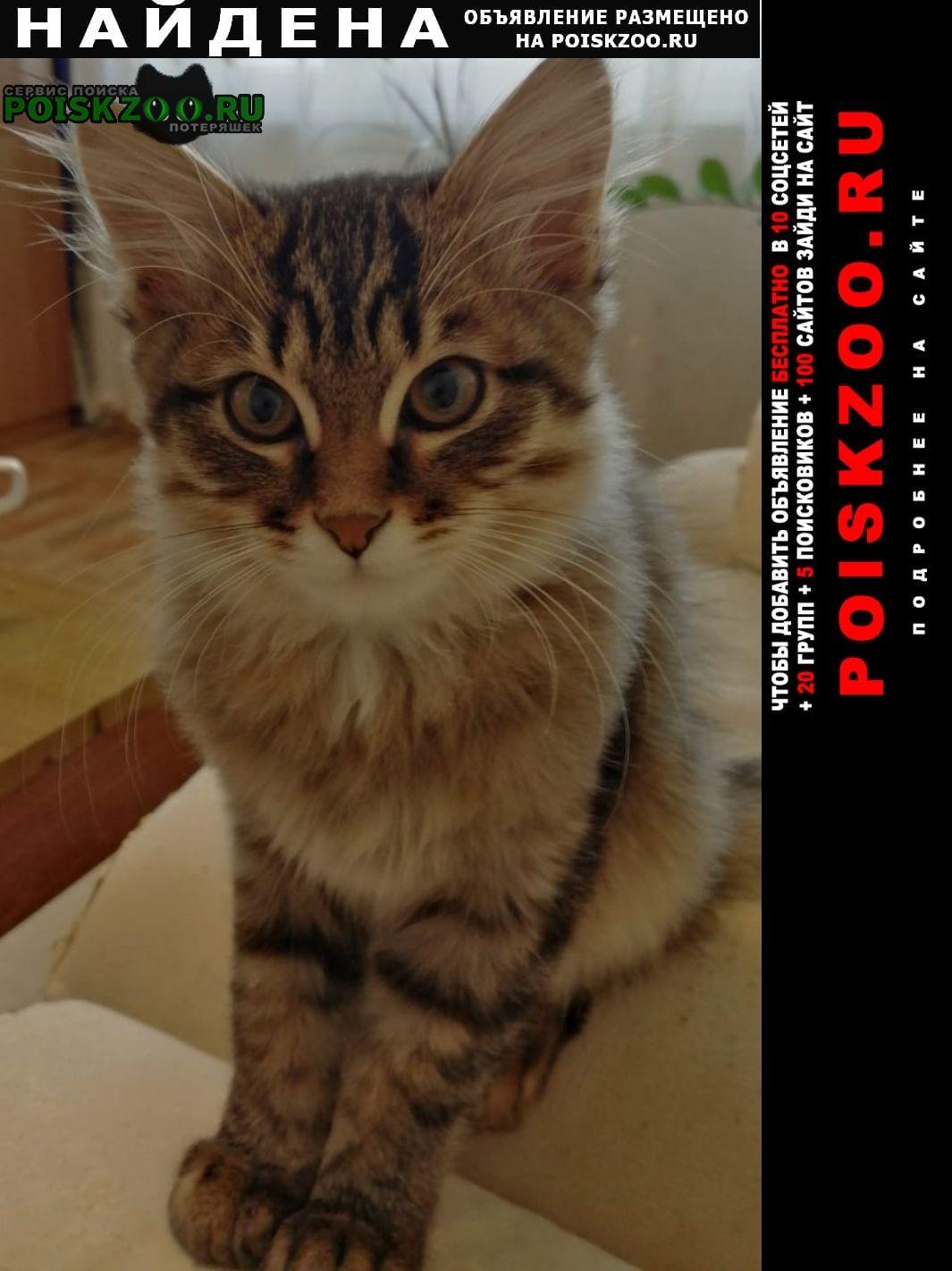 Найдена кошка Набережные Челны