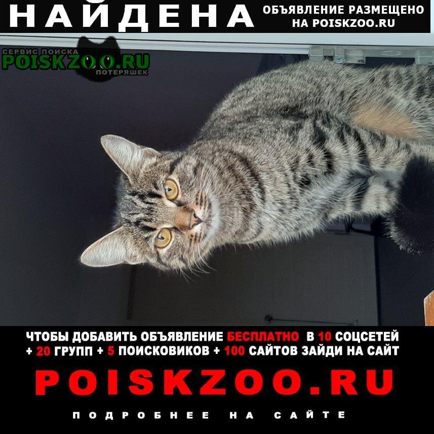 Пермь Найдена кошка на гайве