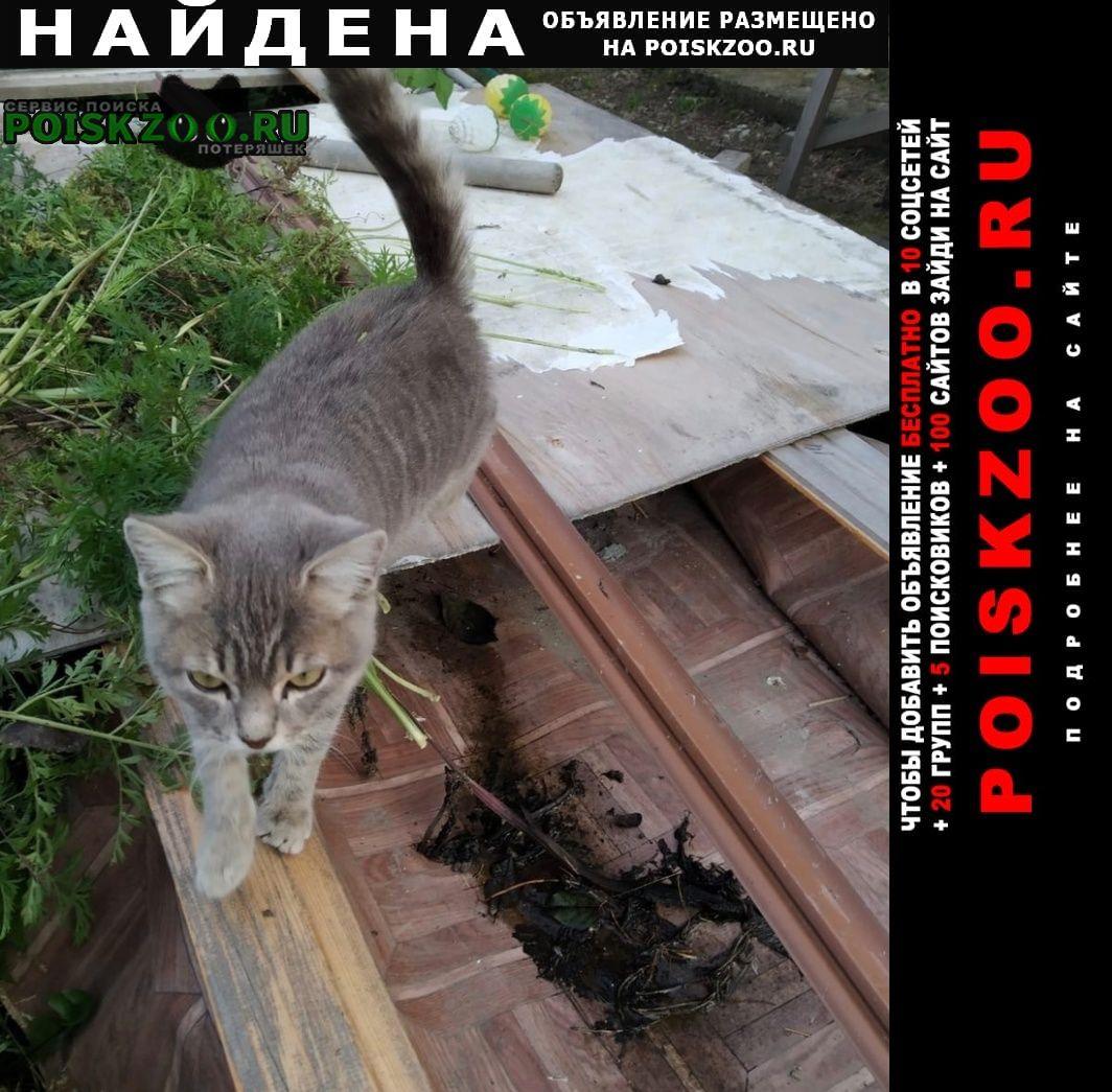 Найдена кошка смирнова полный отчёт Новосибирск