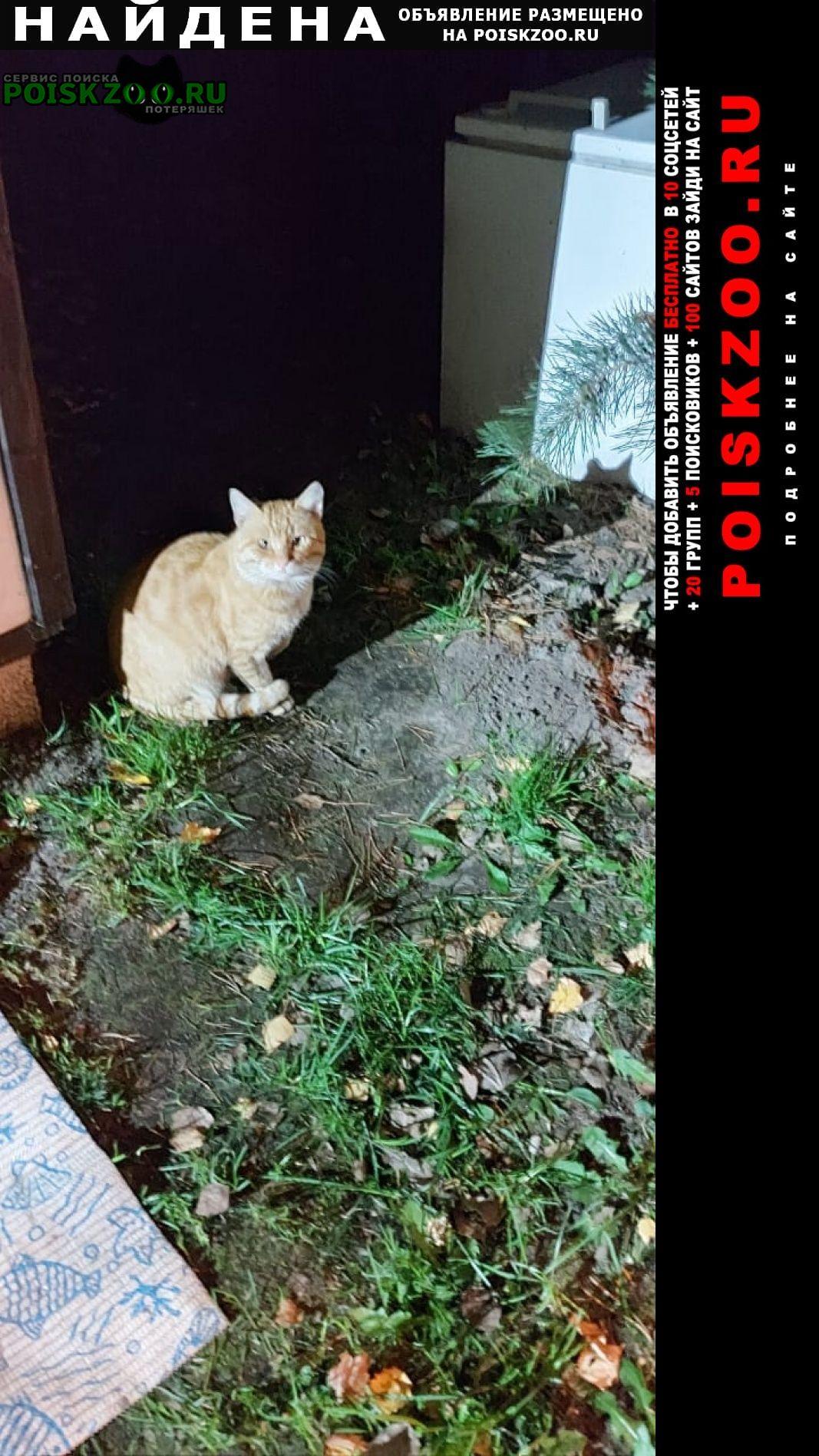 Найдена кошка рыжий кот Электрогорск
