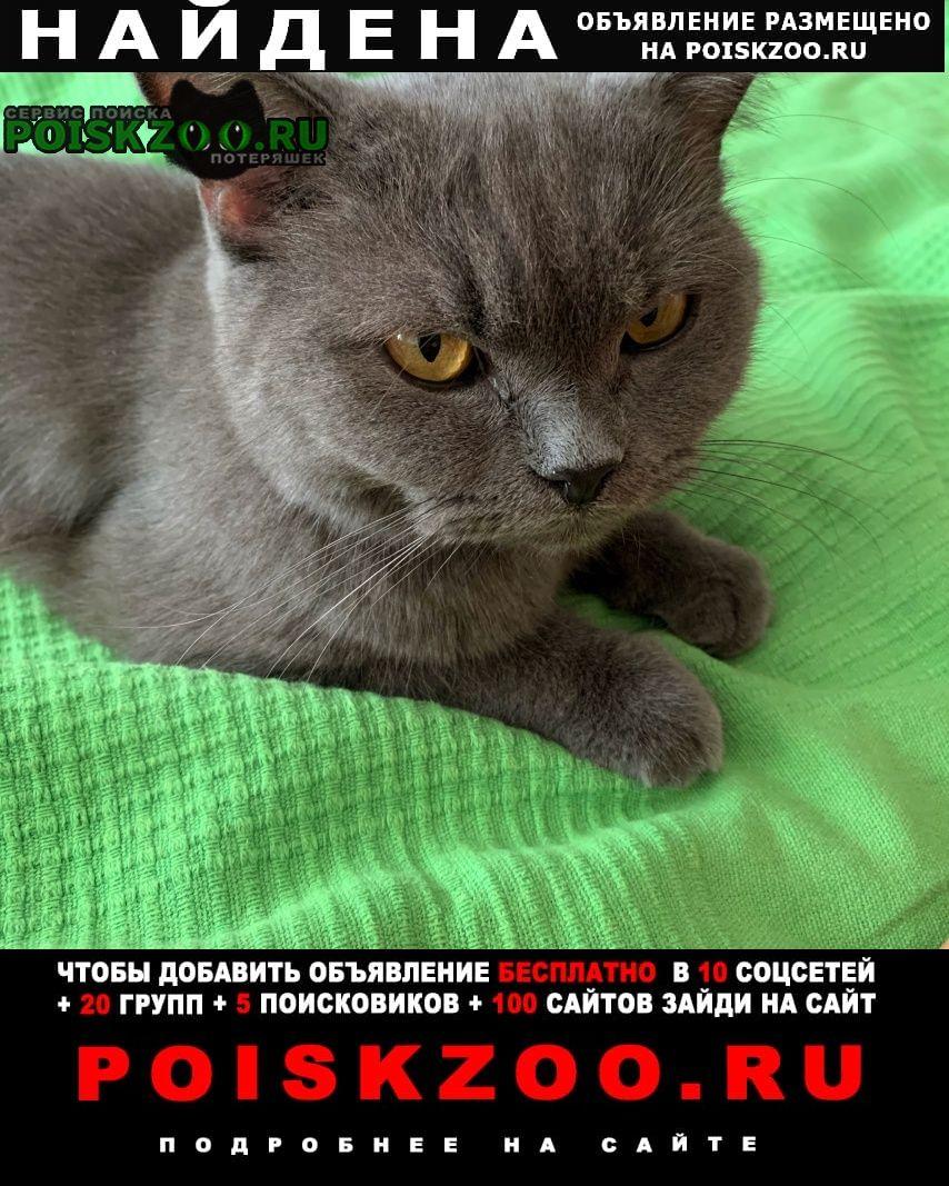 Найдена кошка британская Краснодар