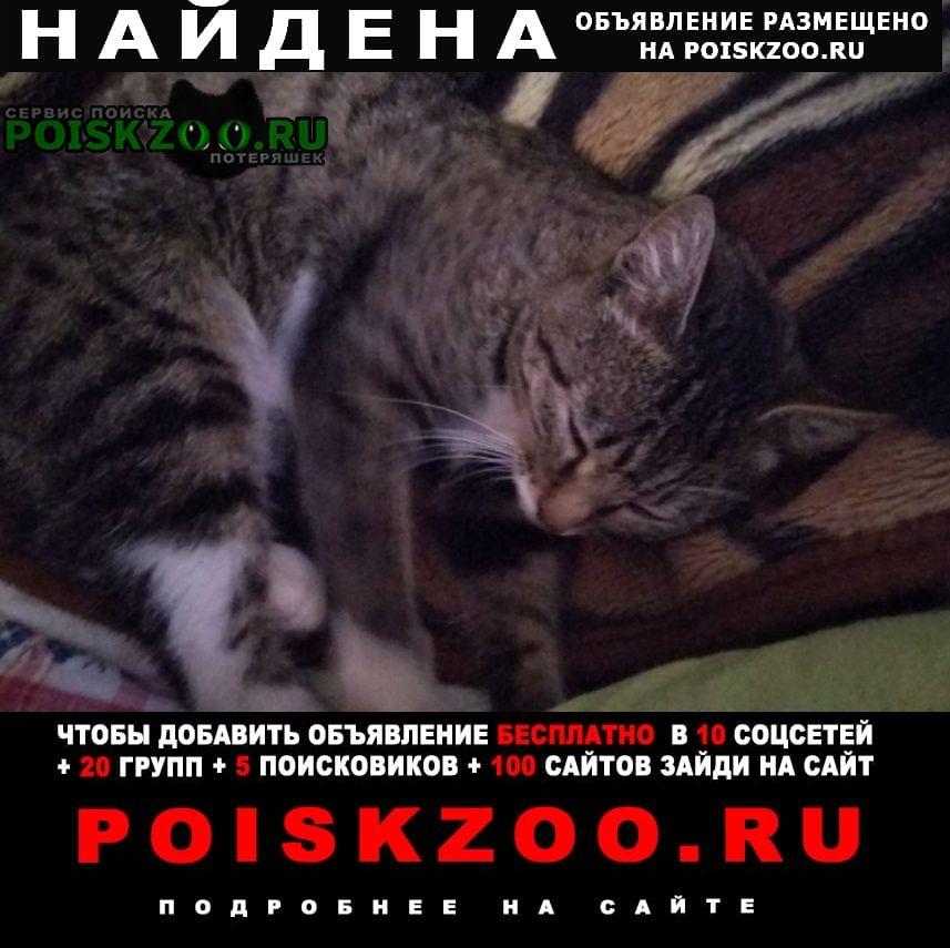 Бийск Найдена кошка (молодой кот)