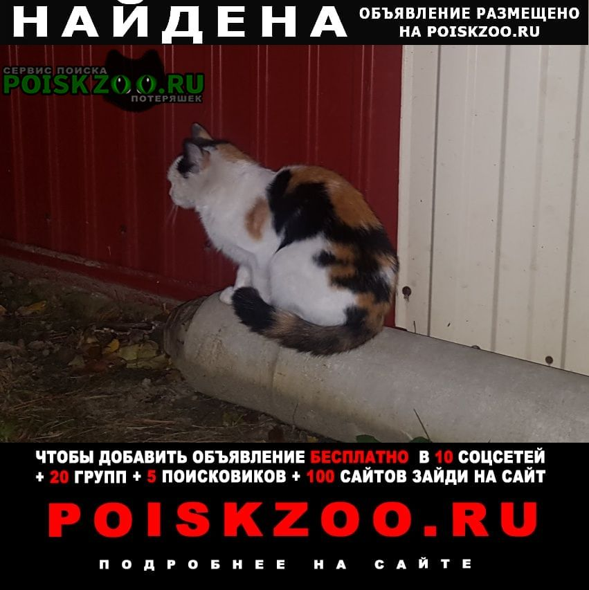 Тюмень Найдена кошка днт мичуринец-2, на андреевском озере