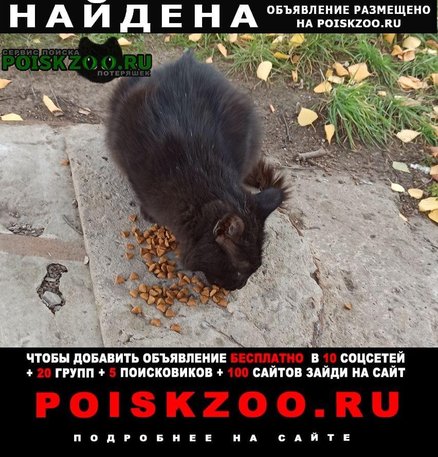 Уфа Найдена кошка кот черного цвета